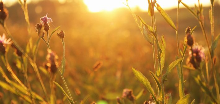 Field at sunrise for blog by DC widow writer Marjorie Brimley