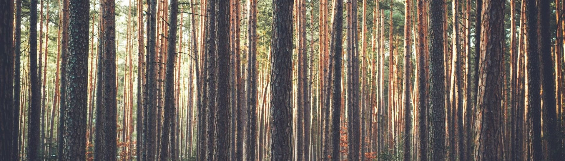 Image of woods like those run by DC widow blog writer Marjorie Brimley