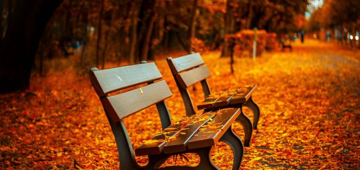 Empty benches in fall leaves for blog by DC widow writer Marjorie Brimley