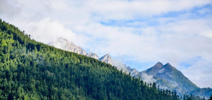 Trees and mountains for blog by DC widow writer Marjorie Brimley