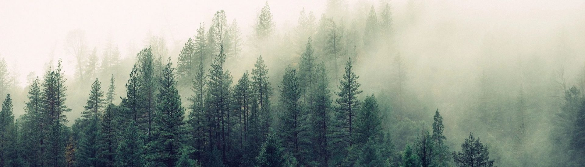 Trees in fog for blog by DC widow Marjorie Brimley